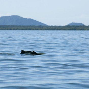 Barca da Ilha - Guaraqueçaba 13